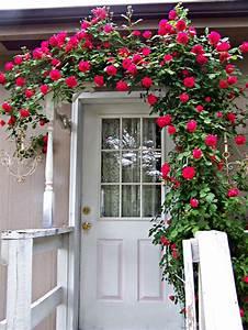 Olivia, U0026, 39, S, Romantic, Home, Shabby, Chic, Rose, Garden