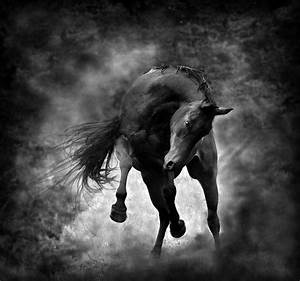 COOL HORSE PICTURES - KICKING UP HEELS