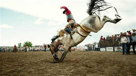 YETI   Stories - All the Bucking Horses