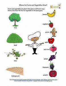 Where Do Fruits And Vegetables Grow Matching Worksheet