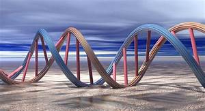 Why Does Dna Need To Replicate