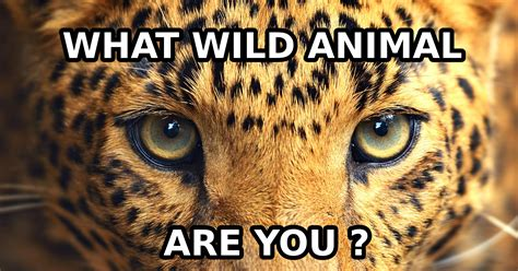kind  wild animal   quiz quizonycom