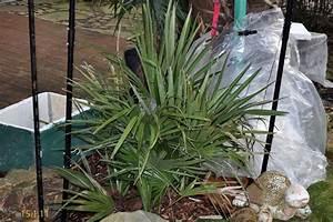 Palmen Für Draußen : palmen und co paar bilder vom we ~ Michelbontemps.com Haus und Dekorationen