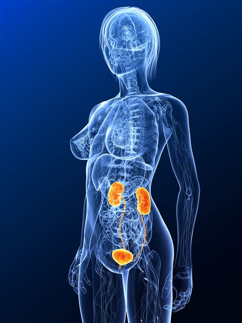urologische und nephrologische erkrankungen im ueberblick