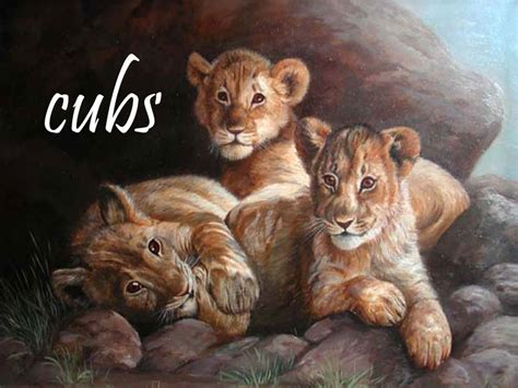 Animal Cubs Wallpapers - animal cubs images cubs hd wallpaper and background photos