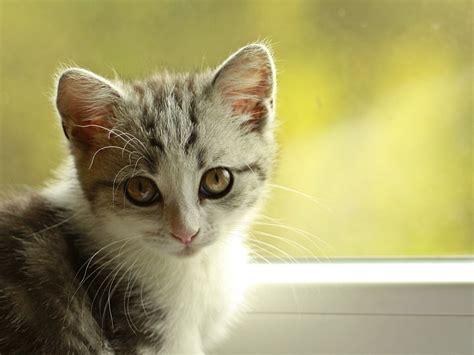 catsmeouch cat discipline  easy