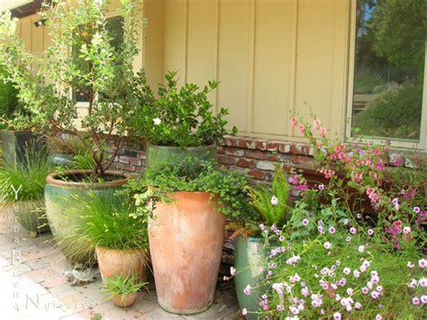 designer plants garden design service yerba buena nursery specializing in california native plants and ferns