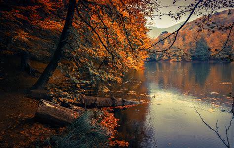 Autumn Leaves | Tafisa