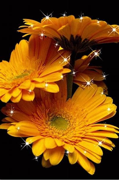 Flores Rosas Imagenes Movimiento Brillo Amarillas Brillos