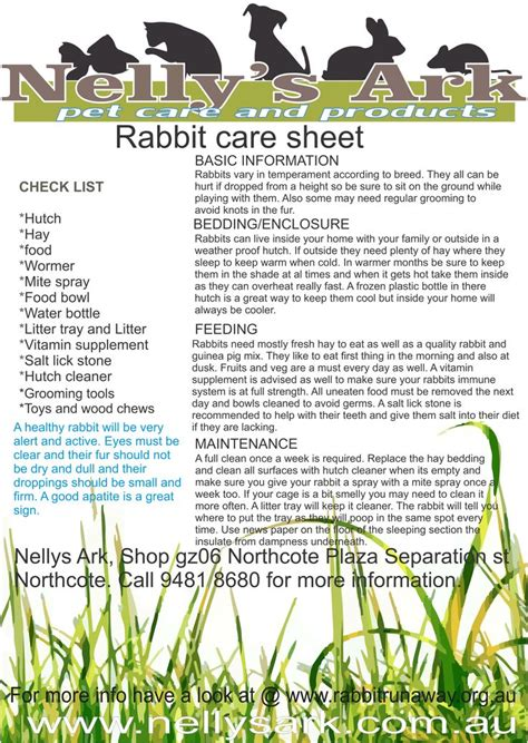 101 best rabbit care 101 images on pinterest bunnies