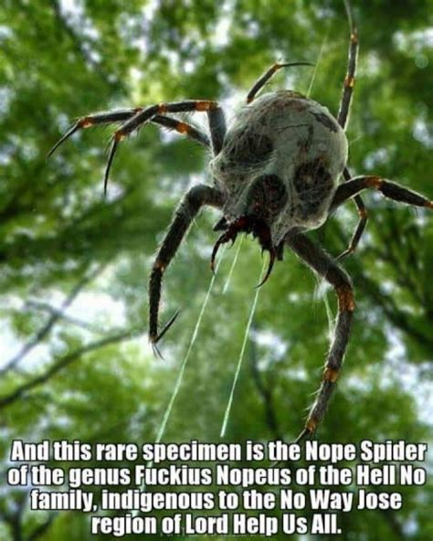 Spider Memes - 139 best images about nope nope nope on pinterest