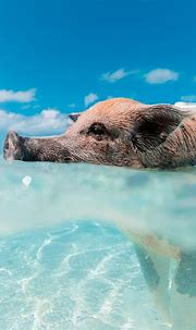 Bath Pictures | Download Free Images on Unsplash | Animal ...