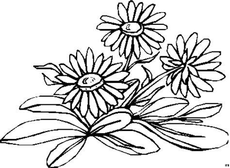 kleine gaensebluemchen ausmalbild malvorlage blumen