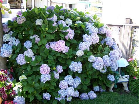 hydrangea garden design garden ideas with hydrangeas home interior design