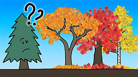 why do trees change color the real reason leaves change color in the fall