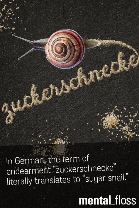 """In German the term of endearment """"Zuckerschnecke"""