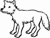 Coyote Coloring Pages Supercoloring Super sketch template