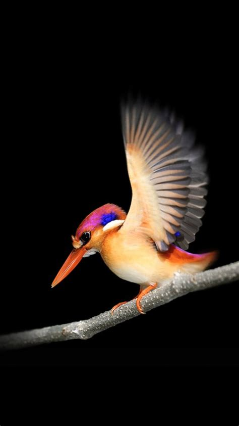 wallpaper woodpecker microsoft surface  stock dark background bird hd animals