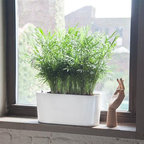 Plants For Windowsill by Indoor Plants Potted In Various Planters Shop My