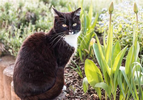 Pflanzen Garten Dinslaken by Fr 252 Hlingstipps F 252 R Haustierhalter Hilfe F 252 R Tiere