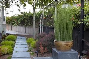 bambou en pot brise vue naturel et deco sur la terrasse With brise vue avec jardiniere 11 plantes de jardin le bambou fascinant et polyvalent