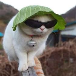 silly cat cat sunglasses interesting facts pictures