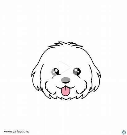 Maltese Dog Face Drawing Easy Drawings Puppy