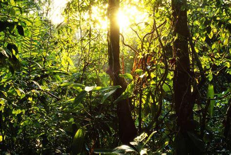 foto foto hutan  indah emmethe