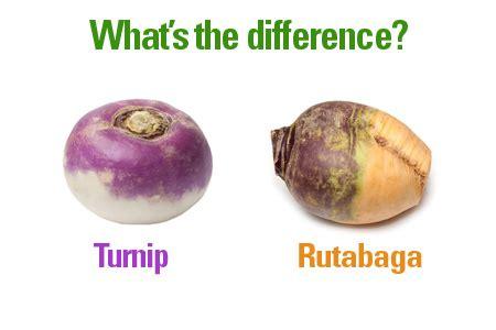 rutabaga vs turnip is it a turnip or a rutabaga farmers almanac