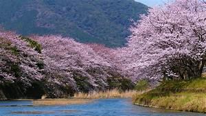 Bäume Umpflanzen Jahreszeit : download 1920x1080 berge b ume fr hling jahreszeit fl sse 2560x1700 hintergrundbild hintergr ndbild ~ Orissabook.com Haus und Dekorationen