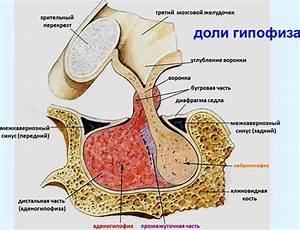 Лечение простатита тибетской медициной