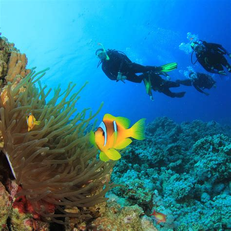 Best Dive Spots In The World by The 11 Best Scuba Diving Spots In The World Scubas