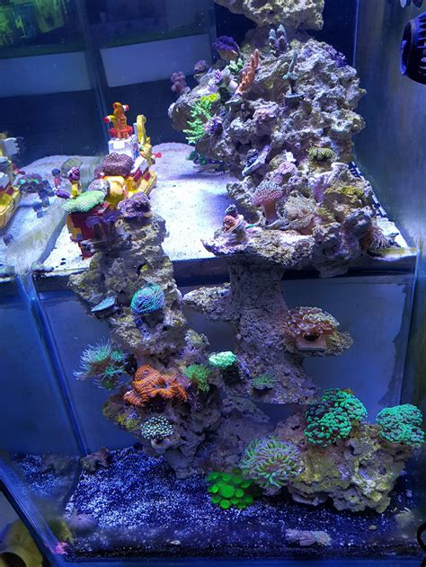 aquascaping reef tank reef aquarium from malaysia orphek led aquarium