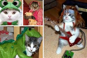 pet cat costumes the pwn zone cats in costumes