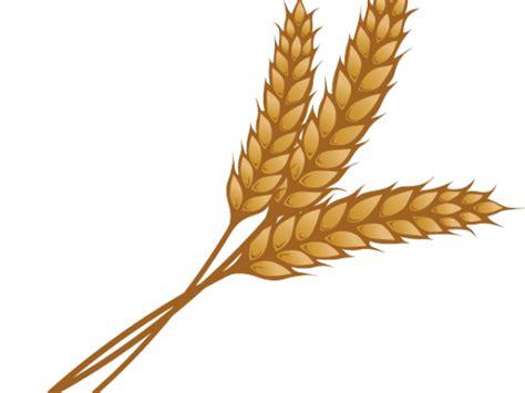 wheat clipart  clipart  dumielauxepicesnet