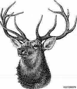 """""""Vintage inage deer head"""" Stock photo and royalty-free ..."""
