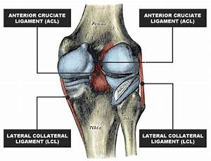 Knee Injuries  Your Questions Answered