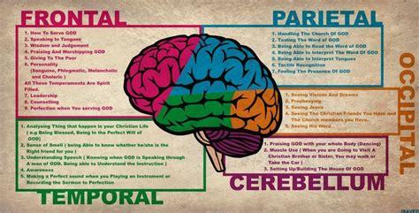 human brain diagram lobes health medicine and anatomy