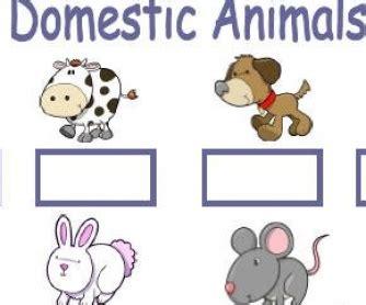 domestic animals  pets worksheet
