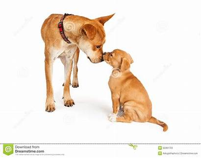 Dog Mother Puppy Clipart Dogs Breed Pet