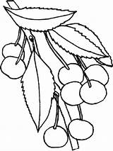 Cherry Coloring Pages Cherries Blossom Fruits Print Printable Recommended Coloringpages101 Popular Children Mycoloring Colors sketch template