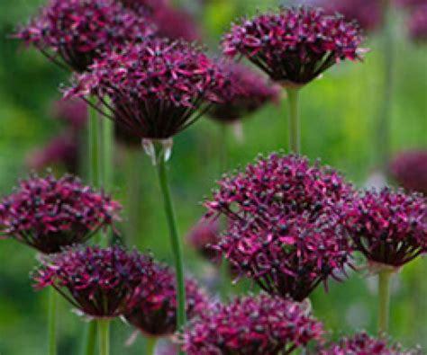 shade loving perennials uk perennial flowering plants for shade uk thin blog