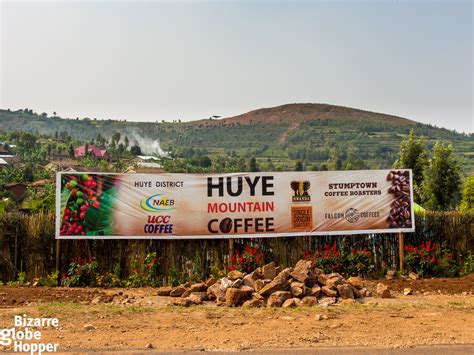 But after the genocide, with the men vanished, the coffee farms languished. Hunting the Best Specialty Coffee Beans in Rwanda | The ...