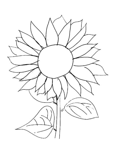 Sunflower Picture Coloring Page: Sunflower Picture