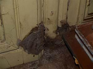 diagnostic salpetre moisissure merule champignons sur With champignon de maison merule
