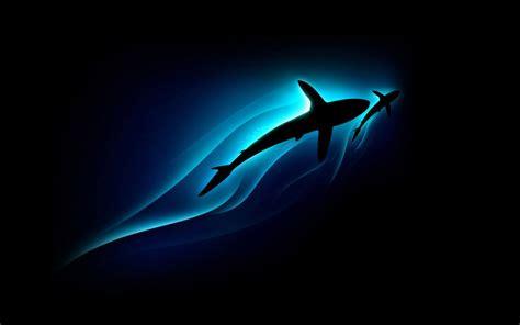 Haaien Achtergronden