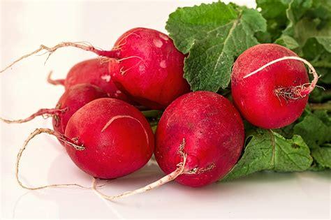 growing radish  basic facts