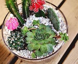 Plantes Pour Jardin Japonais Exterieur : cactus et plantes grasses ext rieur pour un jardin facile ~ Premium-room.com Idées de Décoration
