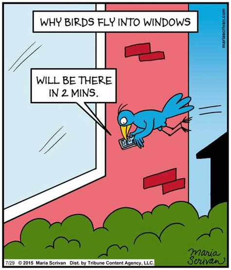 17 best images about pajaros that make me lol on pinterest