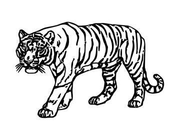 jeu de cuisine pour filles coloriage tigre catégorie félins chiens papoozy fr